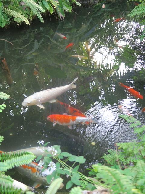 Centennial Park Conservatory: