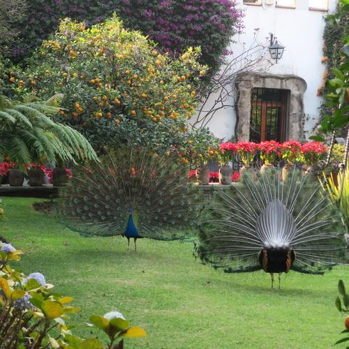 Museo Dolores Olmedo: