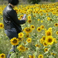 Lakeview Park -- Bright Saturday day trip westbound, as opportunity for outdoor date with social distancing.  Sunflowers were planted in rows, by developers as phytoremediators to purify the soil by absorbing toxins.  Site of Lakeview Generating Station, demolished in 2007.  (Lakeview Park, Lakefront Promenade, Mississauga, Ontario) 20200912