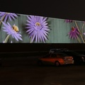 "South Central Letter Processing Plant -- Animation loop @winnietron ""Interchanges"" #BigArtTO inspired by seed dispersion in urban flora, and connecting with friends via tangible mail.  Three large screen projectors aimed above cars in the parking lot, onto the north wall of a major Canada Post sorting station.  Creative invitation to enjoy art in the evening in local neighbourhood, with minimal physical distancing issues during the pandemic.  (South Central Letter Processing Plant, Eastern Avenue, Leslieville, Toronto, Ontario) 20201119"