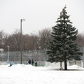 Jimmie Simpson Park -- Snowfall is transitory; snowbanks are persistent.  Young children play on a small white mound while parents observe, in a familiar Canadian moment.  Shovelled our sidewalk and backyard this morning, the forecast is for slightly warmer temperatures that might or might not melt the accumulation.  (Jimmie Simpson Park, Queen Street East, Toronto, Ontario) 20201209