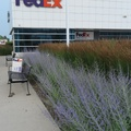 FedEx Ship Centre -- In the Port Lands district, dropping off laptop computer return, with job change.  Original Thinkpad carton fits exactly in the large shipping box, must be more than a coincidence.  Distribution centre has tall grasses indigenous to the Toronto Harbour marshes, better than a lawn.  (FedEx Ship Centre, Commissioners Street, Port Lands, Torotno, Ontario) 20200706